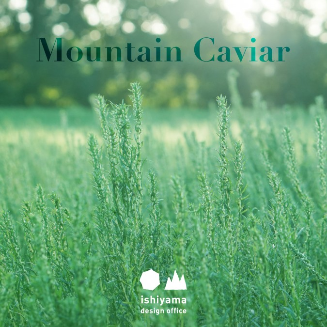 9月 Mountain Caviar