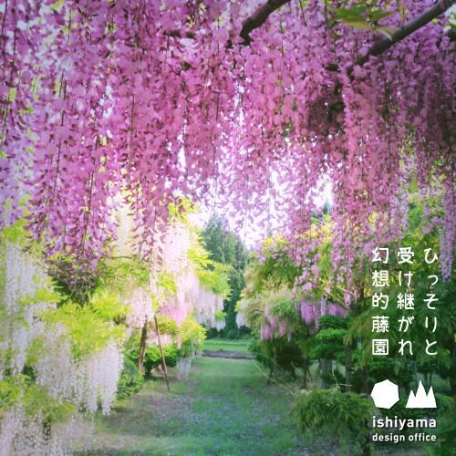 5月 ひっそりと 受け継がれ 幻想的藤園